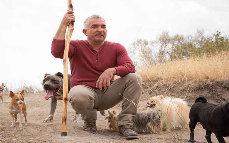 'Días-de-perro-con-César-Millán'-dará-consejos-para-las-mascotas