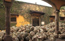 tequila-la-nueva-forma-de-los-narcos-para-lavar-dinero