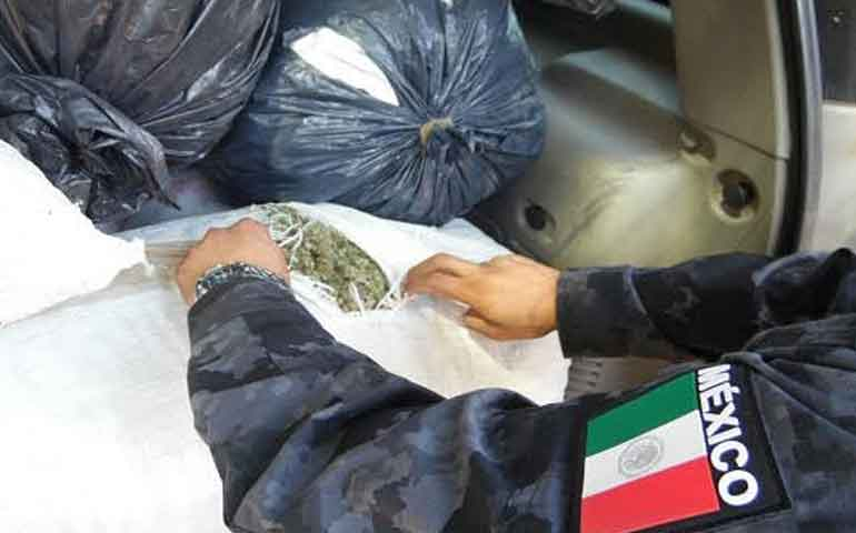 aseguran-mas-de-100-kilos-de-marihuana-en-jala