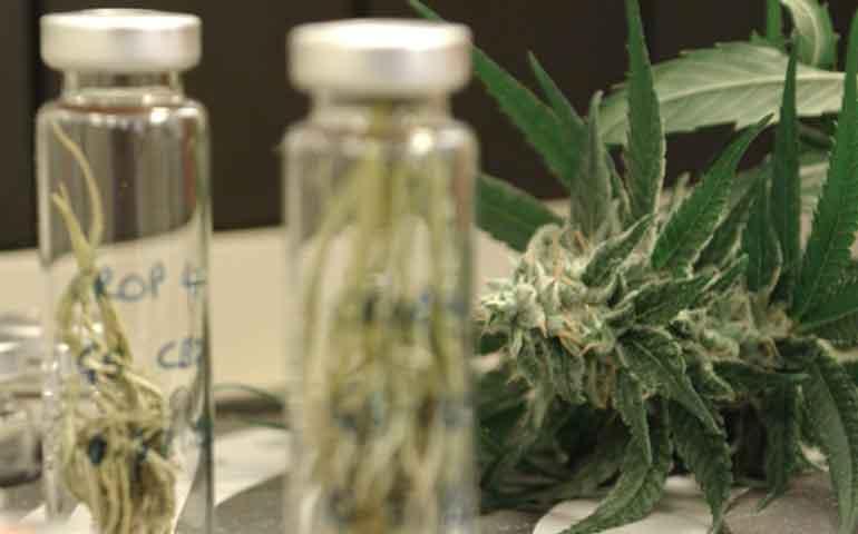 farmacias-venderan-productos-derivados-de-mariguana-cofepris