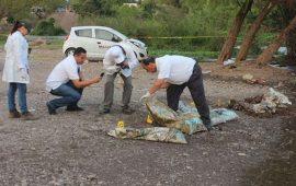 hallan-restos-de-7-personas-en-rio-de-sinaloa