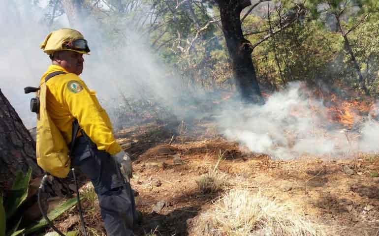 hay-17-incendios-forestales-activos-en-nayarit-conafor