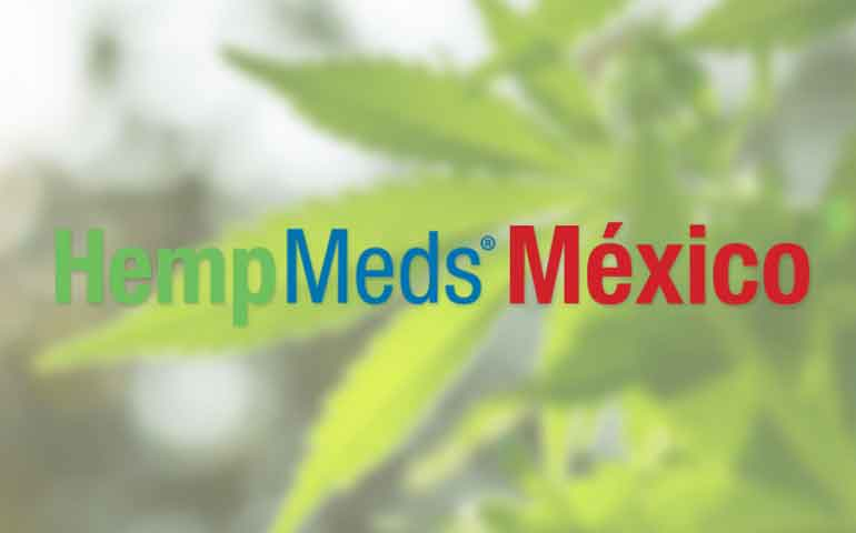 opera-en-nuevo-leon-la-primera-oficina-importadora-de-cannabis-medicinal
