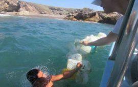 cuidado-del-medio-ambiente-prioridad-para-riviera-nayarit