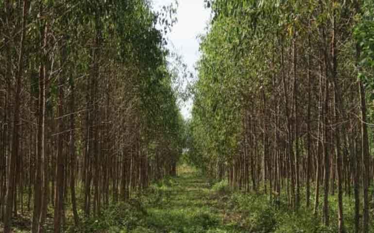 invierte-la-conafor-2-6-mdp-para-plantaciones-comerciales-establecidas-en-nayarit