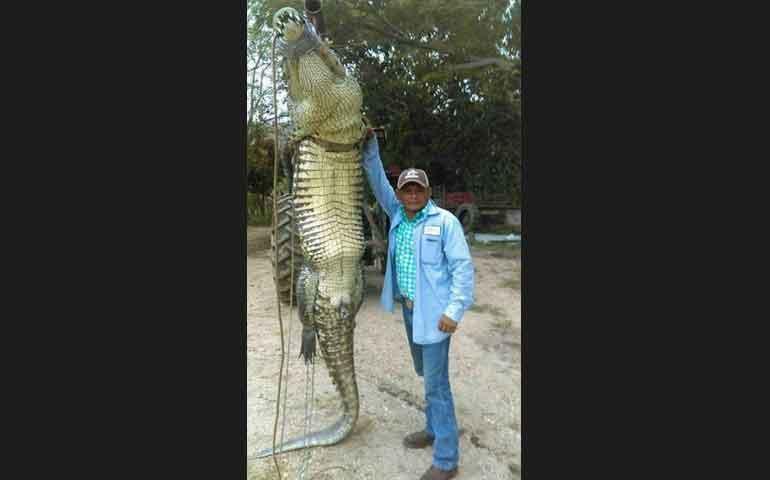 enorme-cocodrilo-mata-a-un-pescador-en-tabasco