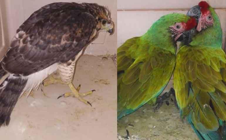 vuelven-a-su-habitat-15-animales-silvestres-en-nayarit