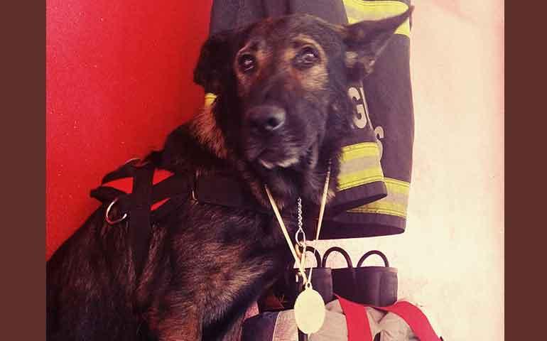 condecoran-a-perro-rescatista-y-lo-premian-con-un-monumento