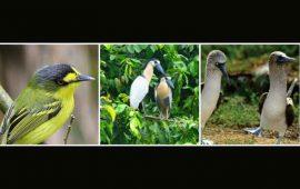 se-realizara-el-primer-festival-de-la-diversidad-de-aves-de-san-pancho
