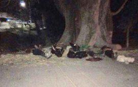 suman-12-ejecutados-en-nayarit-durante-el-fin-de-semana