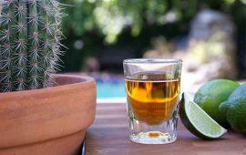 cual-es-la-importancia-del-tequila
