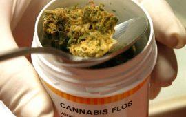 en-diciembre-reglamentacion-para-uso-medicinal-de-mariguana-narro