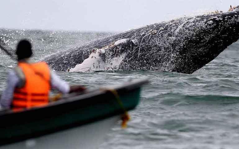 autoridades-ambientales-coordinadas-para-la-temporada-de-ballenas