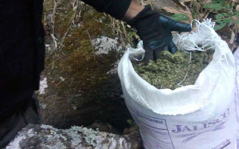 aseguran-marihuana-en-ixtlan-del-rio