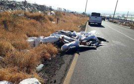 dejan-a-298-tiburones-muertos-en-carretera-de-michoacan