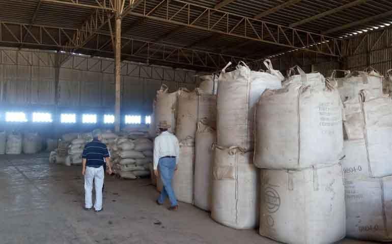 avanza-estrategia-del-frijol-en-nayarit-mas-de-7-mil-toneladas-acopiadas