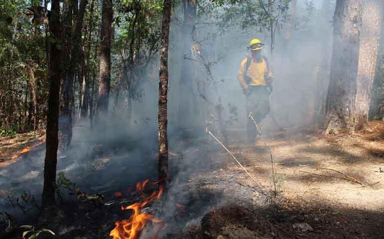 resguardan-zonas-forestales-del-estado
