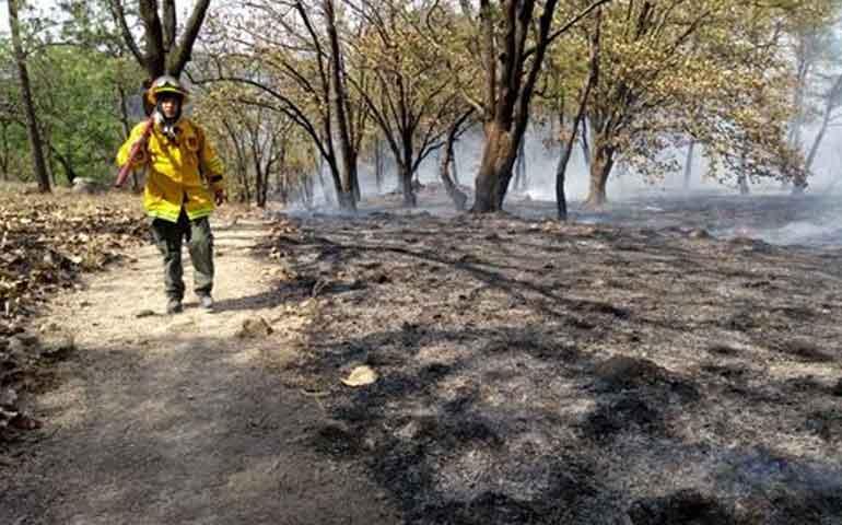 incendio-en-cerro-de-san-juan-fue-provocado-profepa-interpone-denuncia