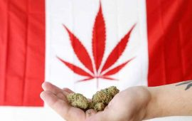 mariguana-sera-legal-en-canada-a-partir-del-17-de-octubre