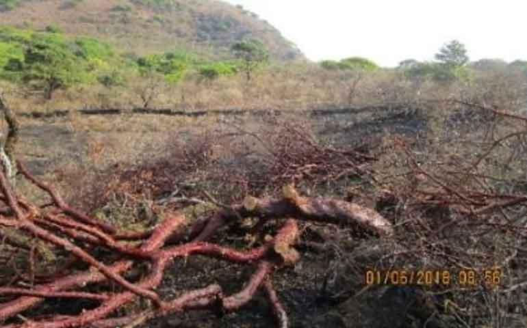 suspende-profepa-obras-en-terreno-forestal-en-el-predio-el-tepehuaje