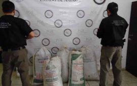 asegura-pgr-59-kilos-de-marihuana-en-ixtlan-del-rio