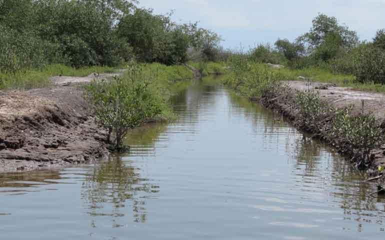 avance-del-80-en-proyectos-de-restauracion-de-manglar-en-nayarit