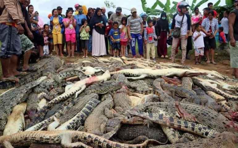 turba-mata-a-292-cocodrilos