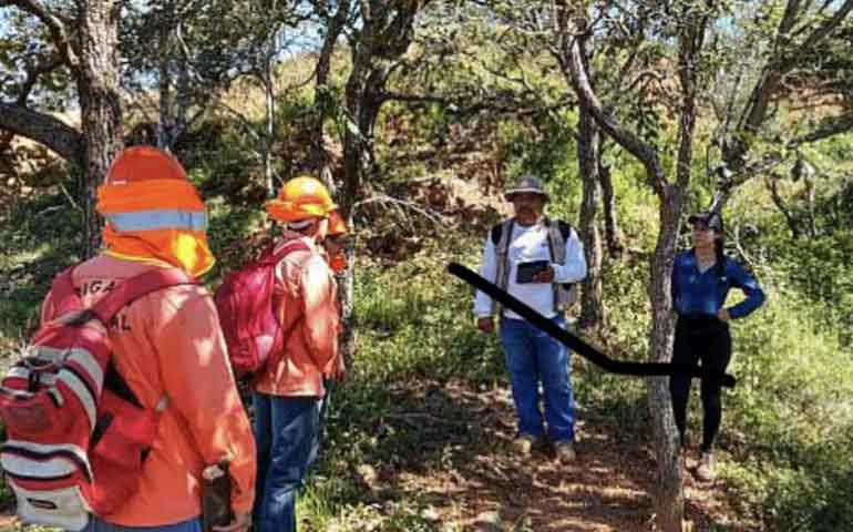 combaten-plagas-en-bosques-de-compostela