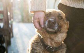 has-perdido-a-una-mascota-estos-consejos-te-ayudaran-a-sobrellevarlo