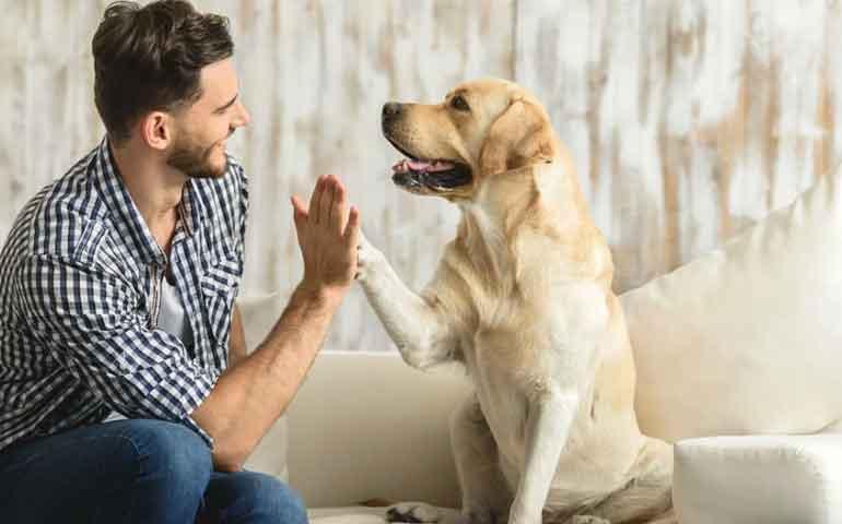 la-ciencia-lo-confirma-la-muerte-de-un-perro-es-tan-dificil-como-perder-a-un-ser-querido
